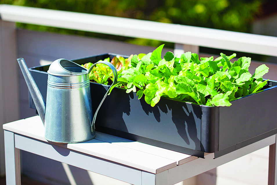 香草植物約2~3天澆一次水,不用天天澆水。