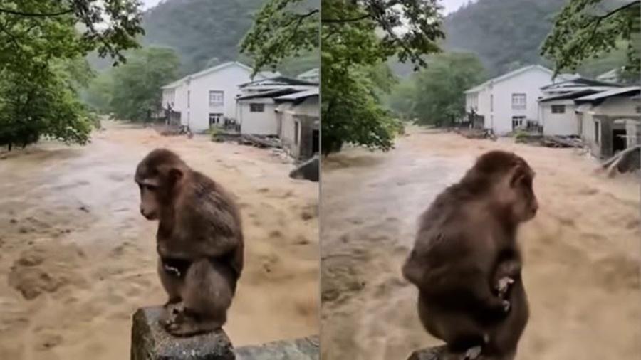 福建武夷山成汪洋 猴子嚇壞蹲橋上躲洪水(多影片)