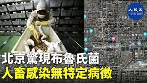 【獨家】北京驚現布魯氏菌 人畜感染無特定病徵