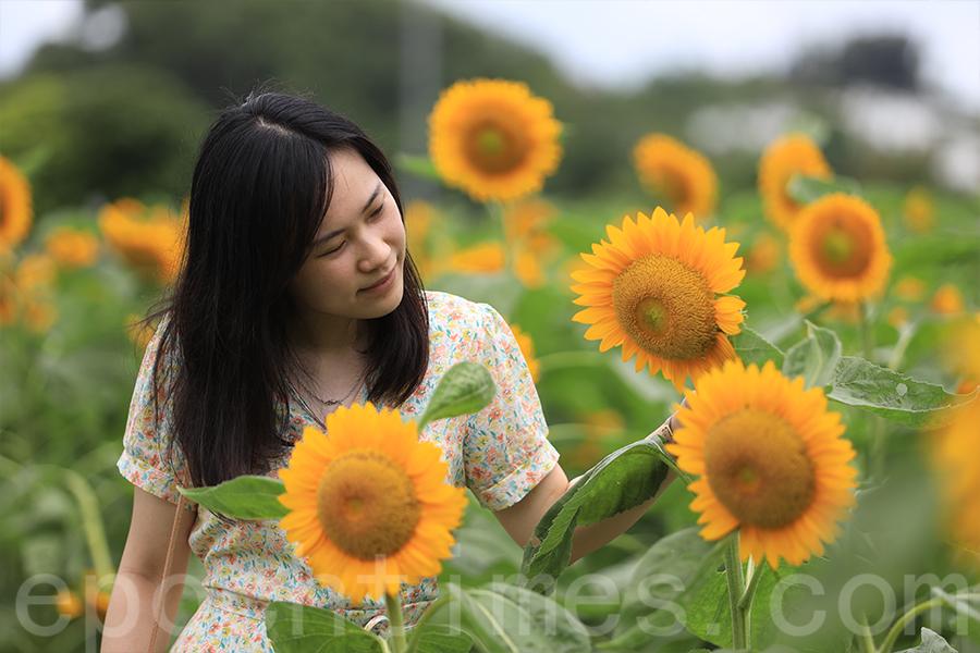 前年Yucca到訪元朗新田信芯園,燦爛的太陽花給她留下了深刻的印象。(陳仲明/大紀元)
