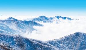 韓國健康的精髓 ——高麗參
