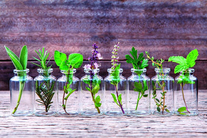 尤加利、天竺葵和茶樹精油對於呼吸道淨化及消毒有助益。