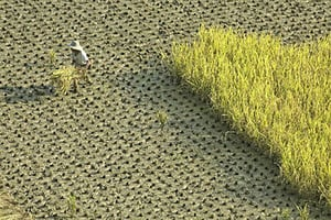 中共強制農民種糧 引發糧食危機質疑