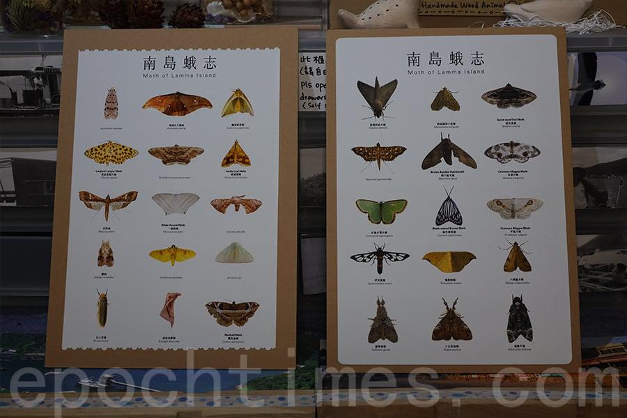 陳錦偉編撰《南島蛾誌》記錄在南丫島發現的不同品種的飛蛾。(陳仲明/大紀元)