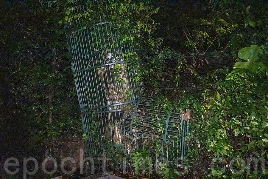 南丫島內有不少沉香樹設置鐵欄保護,陳錦偉希望人們能愛護這珍貴的樹種。(陳仲明/大紀元)