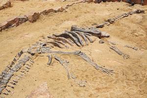 1.1億年前恐龍最後一餐吃了什麼