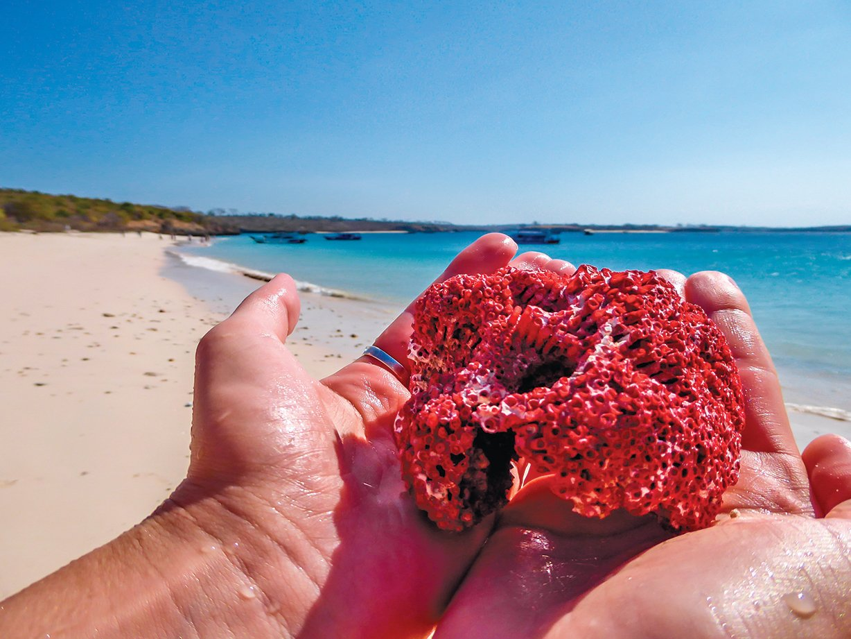 沙灘顏色來自紅色珊瑚礁。