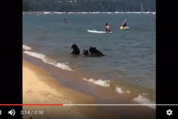 日前在加州太浩湖(Lake Tahoe)驚現3隻黑熊亦來到湖邊與人們一同嬉水消暑。(youtube截圖)