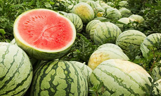 紅色西瓜有除煩止渴、降壓利尿、寬中下氣、降火等功效。