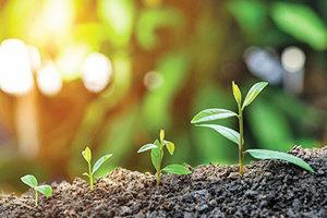 傾聽植物生存需求:科學家揭示其處理信息機制