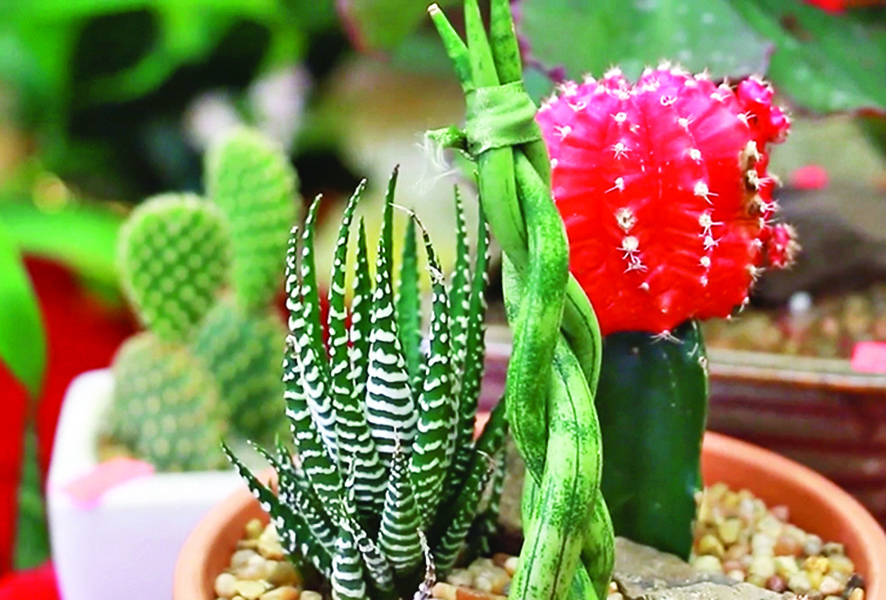 室內植物的養護方法