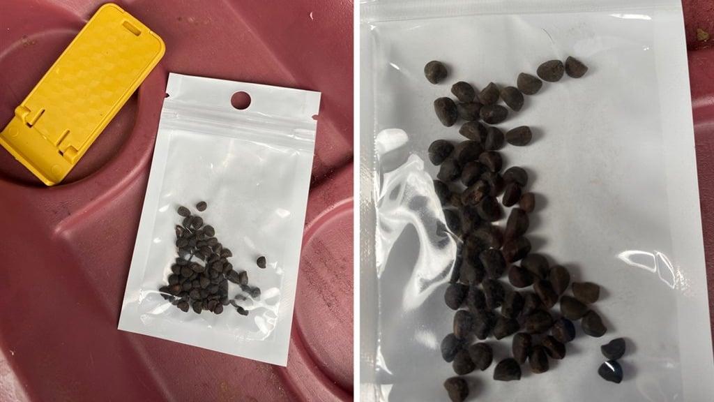 美國多州民眾收到疑似來自中國的不明種子,當局警告不要種植。(推特圖片)