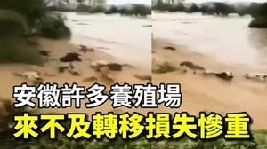 洪水沖走禽畜 安徽多個養殖場遭滅頂之災