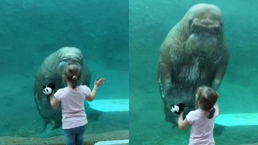 巨大海像隔玻璃親吻小女孩 眾人驚呼連連