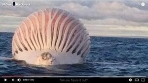 海上現「外星巨怪」真相令人大吃一驚