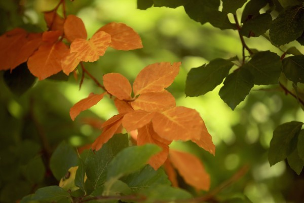 立秋,是二十四節氣中的第13個節氣。「立秋」來暑氣開始收。立秋分為三候:「一候涼風至;二候白露生;三候寒蟬鳴。」(Christopher Furlong/Getty Images)