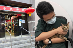 新港城街市推驅貓令 區議員反對並促撤回