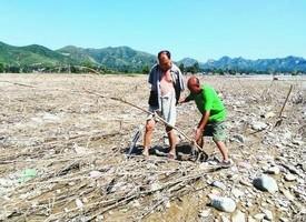 河北老哥倆「種樹不敢賣」一場洪水心血全毀