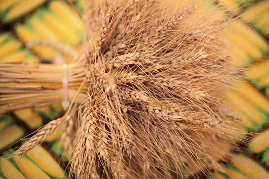 陸大幅增購小麥 7年來最多