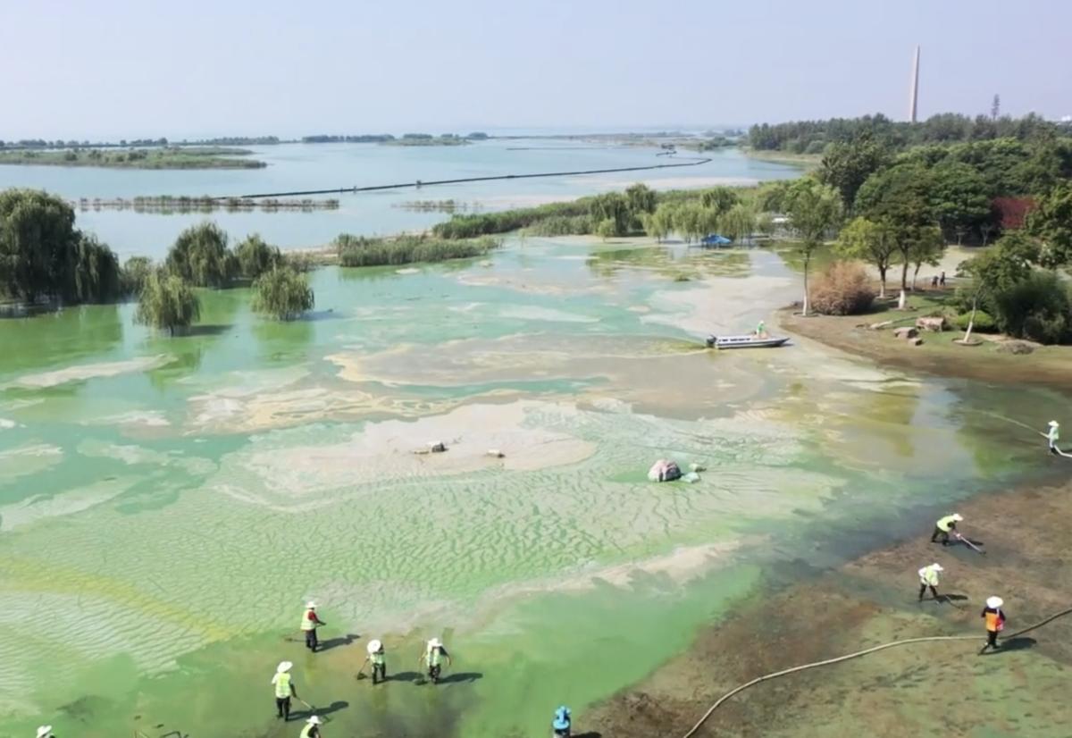 因高溫天氣,洪水過後的安徽巢湖已經變成一片「綠海」,藍藻的快速繁殖不僅污染環境,還直接威脅魚類的生存。(圖:視像截圖)