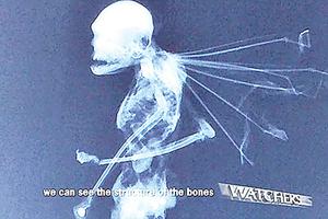 X光看墨西哥異形生物 骨骼似人體縮小版