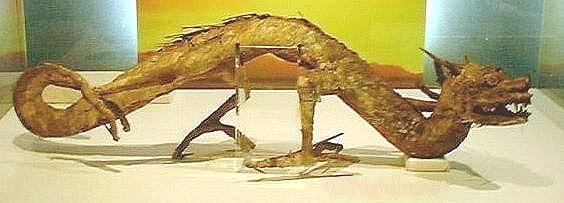 在日本大阪的瑞龍寺展示了一個小型的乾製龍標本,標本僅有一米長。據說是明朝時由漁夫在海邊捕獲,之後出口到日本,被日本著名收藏家萬代籐兵衛買下後,又將標本捐給了瑞龍寺,一直保存至今。(網絡圖片)