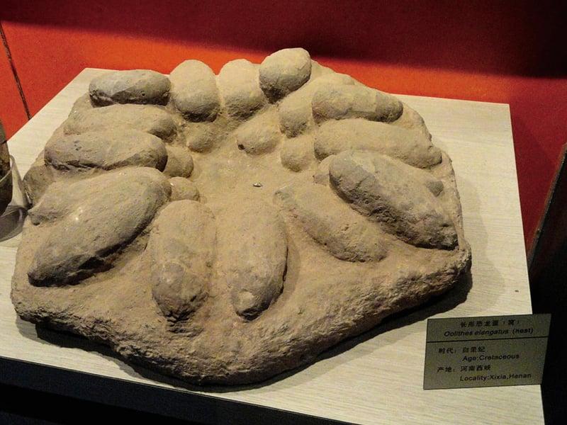 日本發現 世界最小恐龍蛋化石