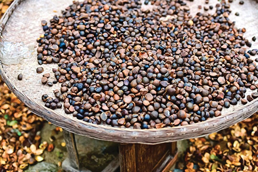 苦茶籽榨油後,剩下的苦茶粕還有許多用途。(Shutterstock)