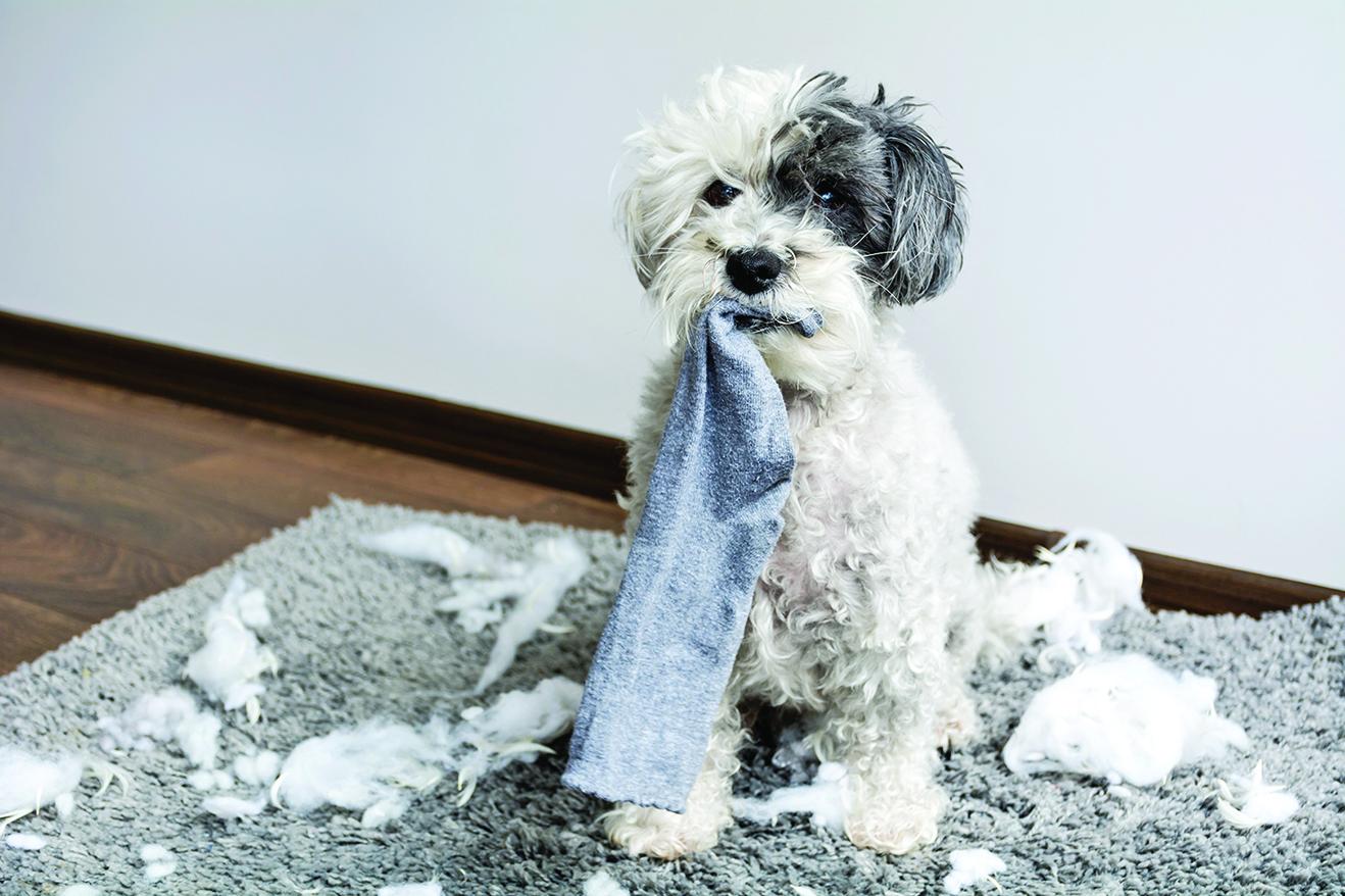 事先做好準備,才能讓狗自己在家時,不會有破壞行為!