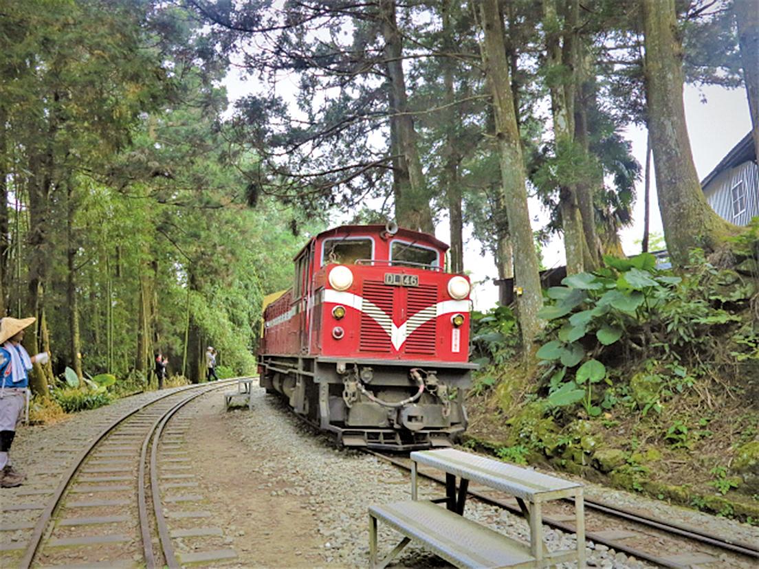 登山客和大批的遊客,搶著來拍森林小火車。