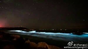 福建長樂沿海現「藍眼淚」 美景下暗藏危機