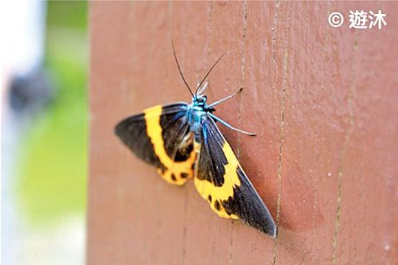 感受大自然中的一動一靜,欣賞彩蝶之美。