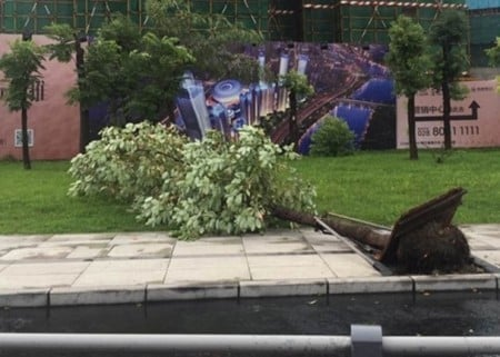 路邊樹木被連根拔起。(網絡圖片)