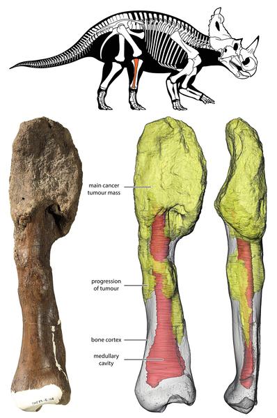 前所未有為七千萬年前恐龍確診罹癌