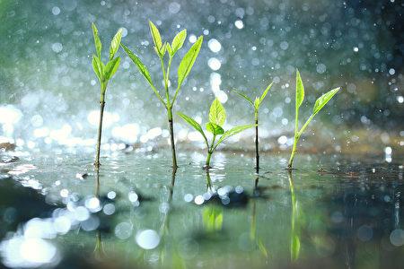春耕、夏耘、秋收、冬藏,只有順應這個時間順序,才能夠使得糧食不斷絕。(Shutterstock)