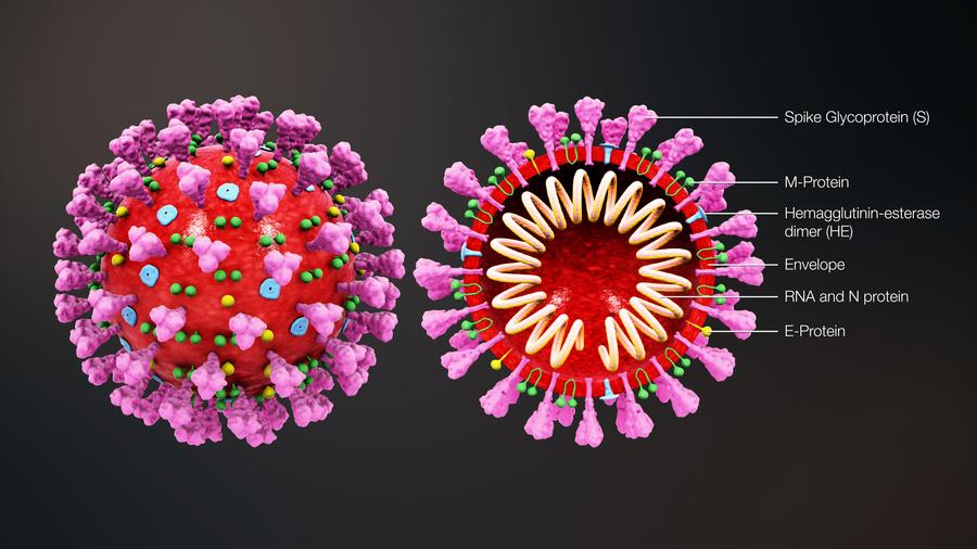 馬來西亞發現中共病毒超強變種 感染力強十倍