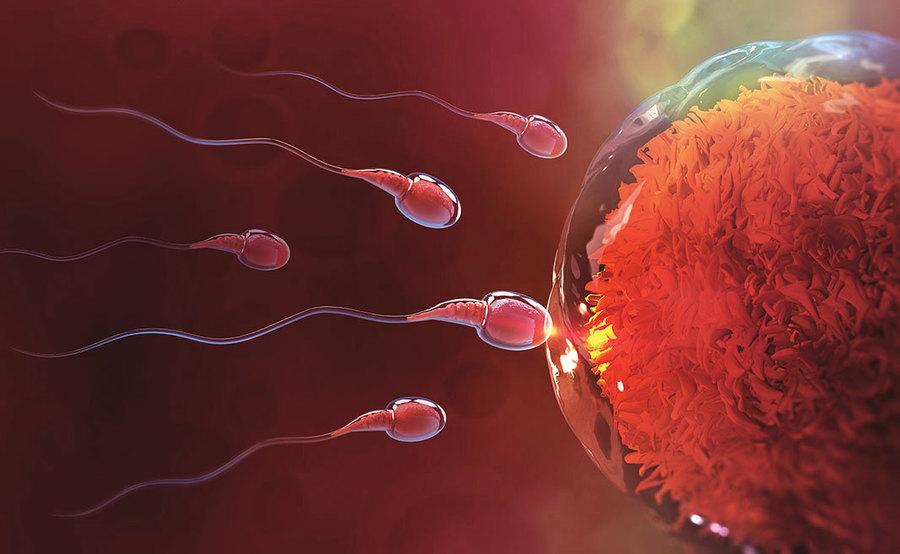 3D影像揭開精子運動隱藏350年的秘密