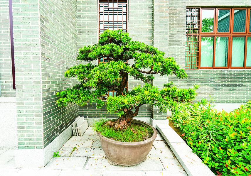 想招好運! 綠色植栽助你提升居家風水