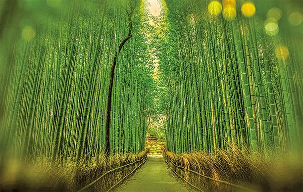 白居易歌頌竹之德:固、直、空、貞,在其中能接近、了解他的修行人生。 (pixabay)