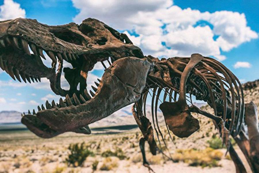 恐龍依靠獨特骨骼結構承載其體重