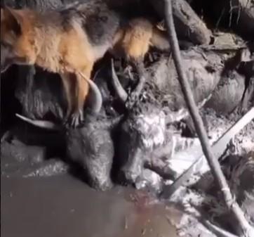 8月17日,四川阿壩爆發的泥石流,讓多處民房,圈舍,田地被掩埋。(網絡影片截圖)