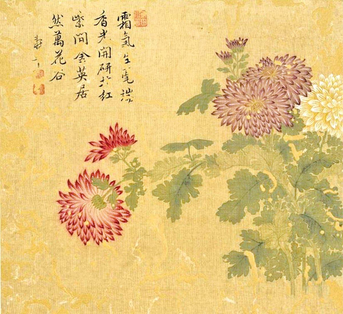 清惲壽平畫花卉  冊  菊花(公有領域)