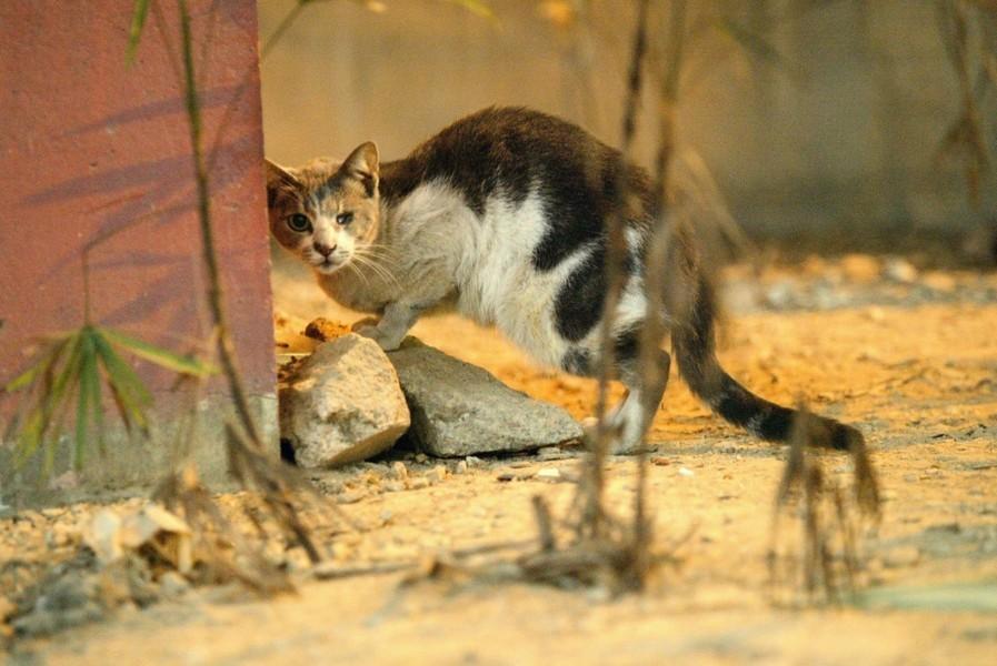 深井十五隻動物遭虐殺律政司不起訴 民眾憤慨求交代