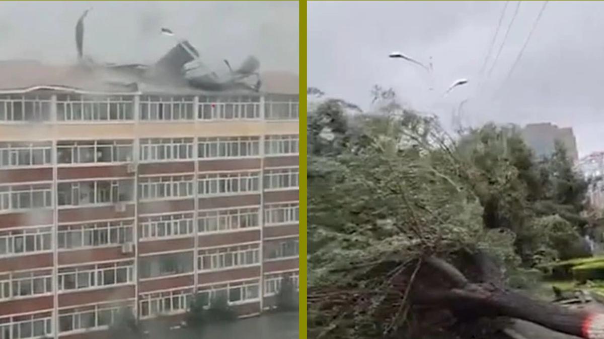 繼颱風「巴威」之後,「美莎克」又重創中國主要產糧區東北。圖為吉林省延吉市大樓被掀翻屋頂,大樹被折斷。(網絡圖片/新唐人合成)