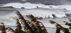 中國東北半月遭三颱 廣西海灘現死魚群