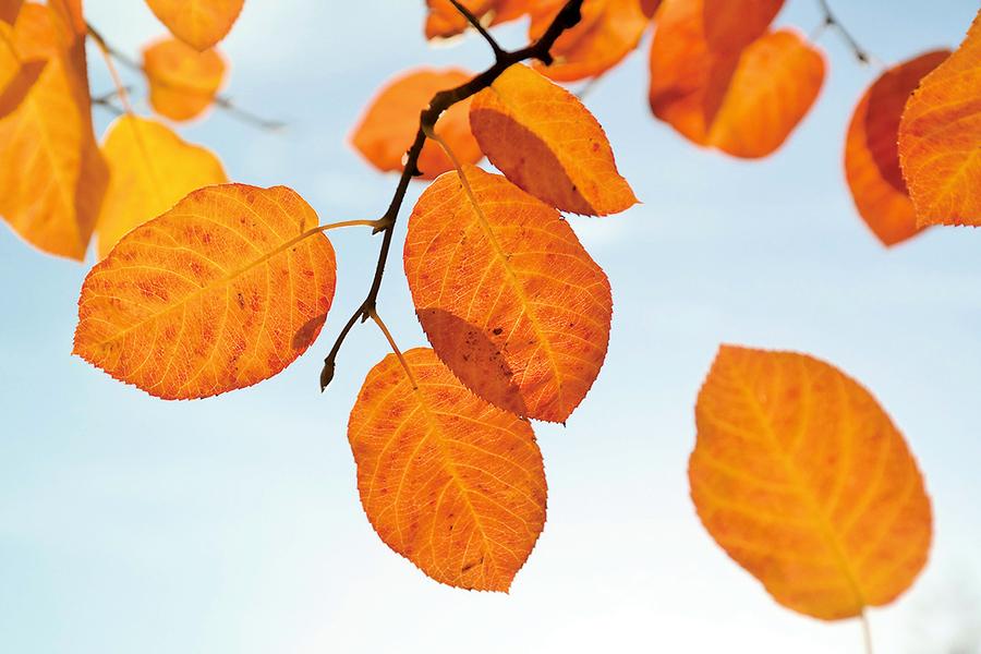 梧桐一葉知秋,立秋節氣與風俗