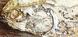 1億年前 最老心臟化石被發現