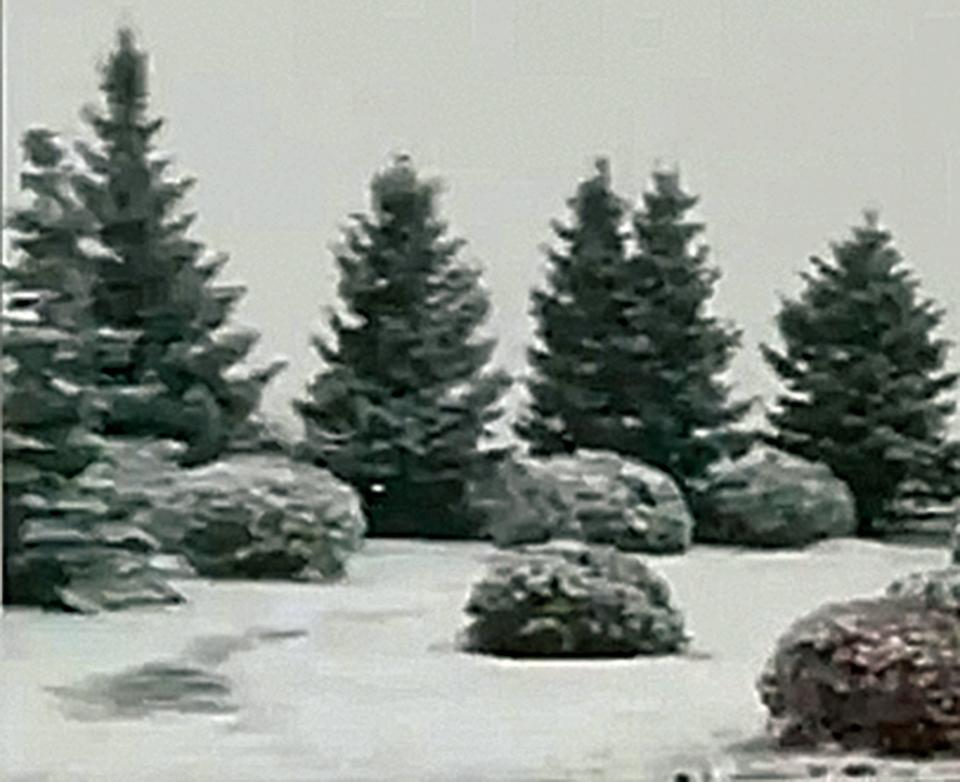 據陸媒報道,15日夜間,內蒙古赤峰市克什克騰旗阿斯哈圖石林和黃崗梁,下起入秋以來首場雪。路面積雪深2厘米左右,草場被積雪覆蓋,對當地畜牧業造成影響。降雪持續到16日10時左右。赤峰市氣象台工作人員表示,近三年都沒出現過這樣的天氣。(影片截圖)◇