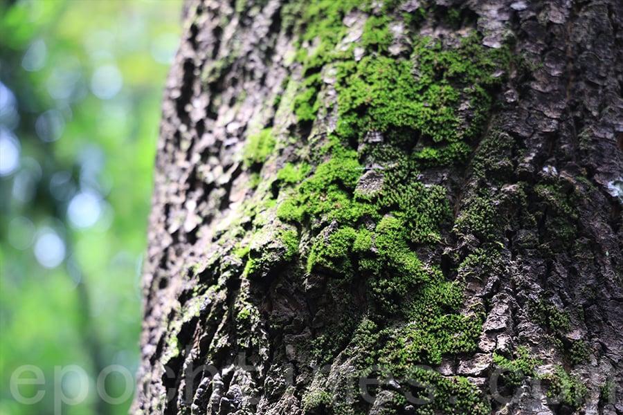 觀賞大自然中的每一個細節,當中都有值得探索的部份。(陳仲明/大紀元)