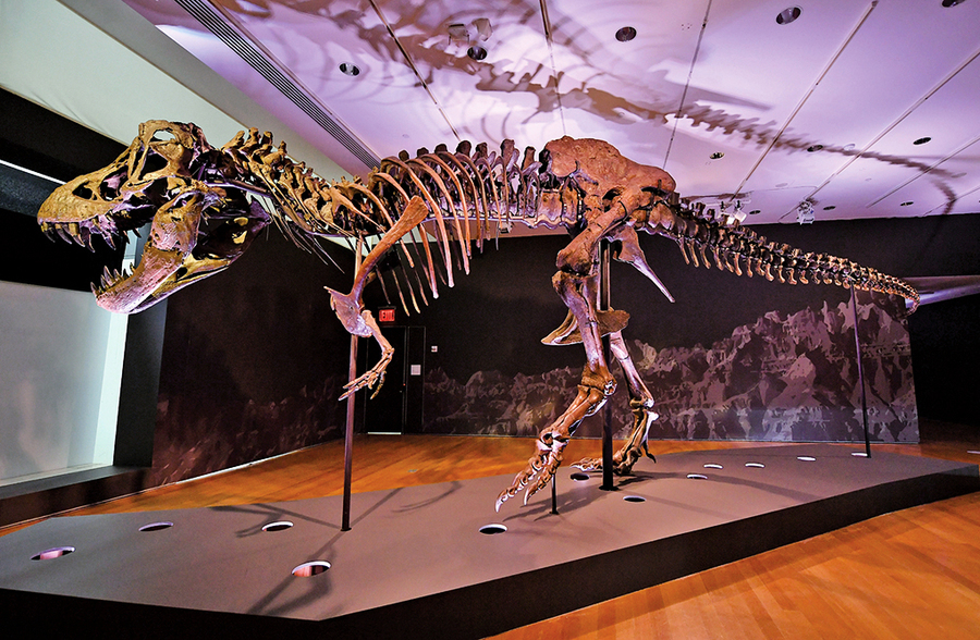 完整霸王龍化石「史丹」即將拍賣